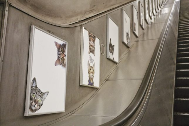 The Citizens Advertising Takeover Service replaced 68 adverts in Clapham Common tube station with pictures of cats. Organisers say they hope the pictures will help people think differently about the world around them. Credit: CatsnotAds.org