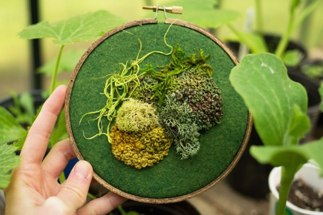 cross-stitch-moss-2