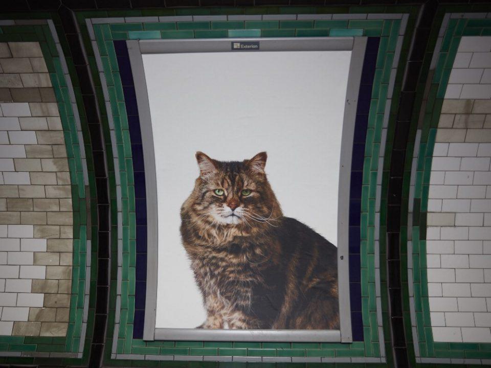 subway cats 1