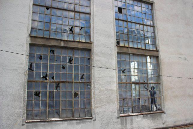 bird-window-boy-shooting