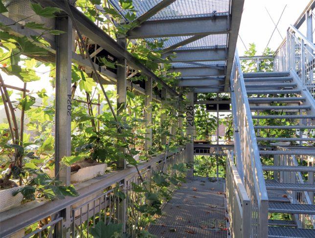plant-structure-interior