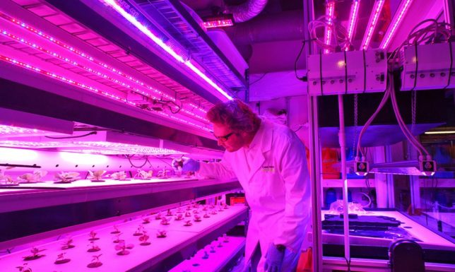 vertical-farming-in-store