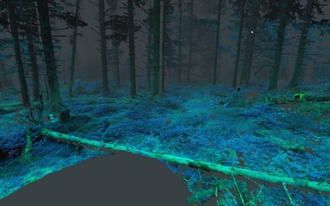 virtual-reality-forest-6