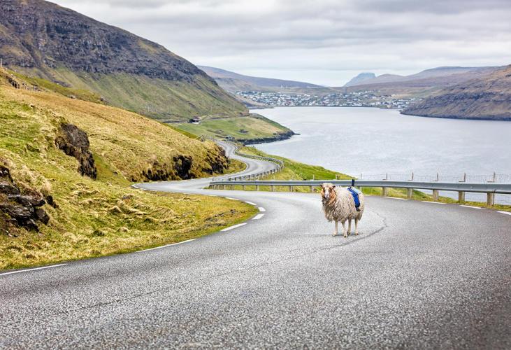 google-sheep-view