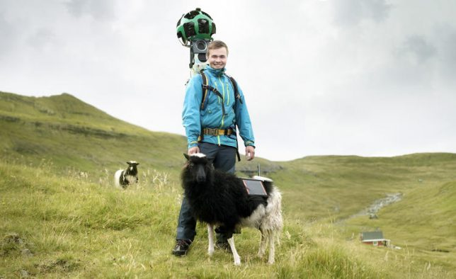 sheep-view-mounted