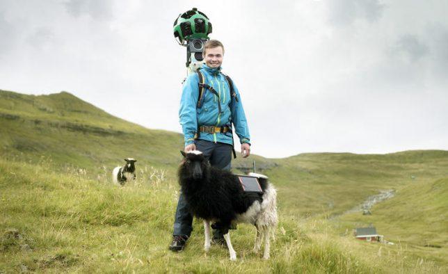 sheep-view-mounted