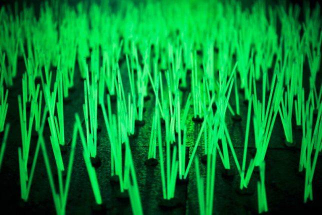 glow-in-the-dark-mutant-weeds-2