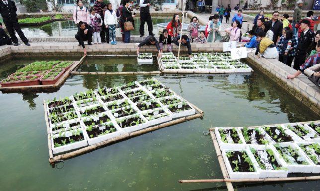 floating gardens 1