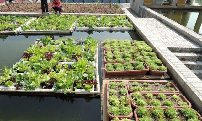 floating gardens 2