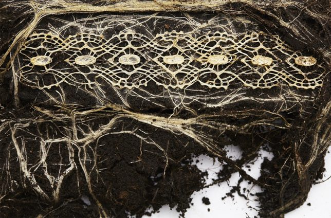 plant-root-art-4