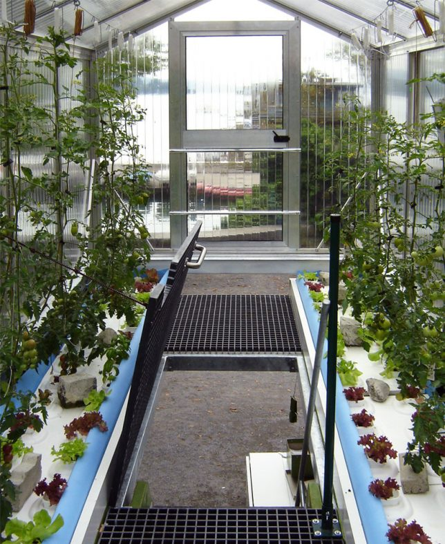 shipping container greenhouse 2