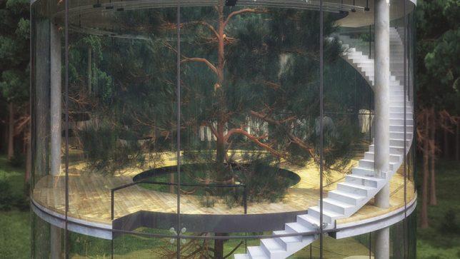 transparent tree house 2