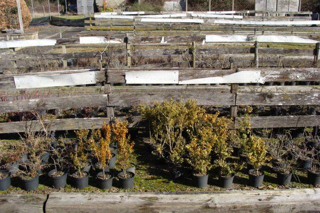 Face Plants 10 Lifeless Abandoned Garden Centers Urbanist